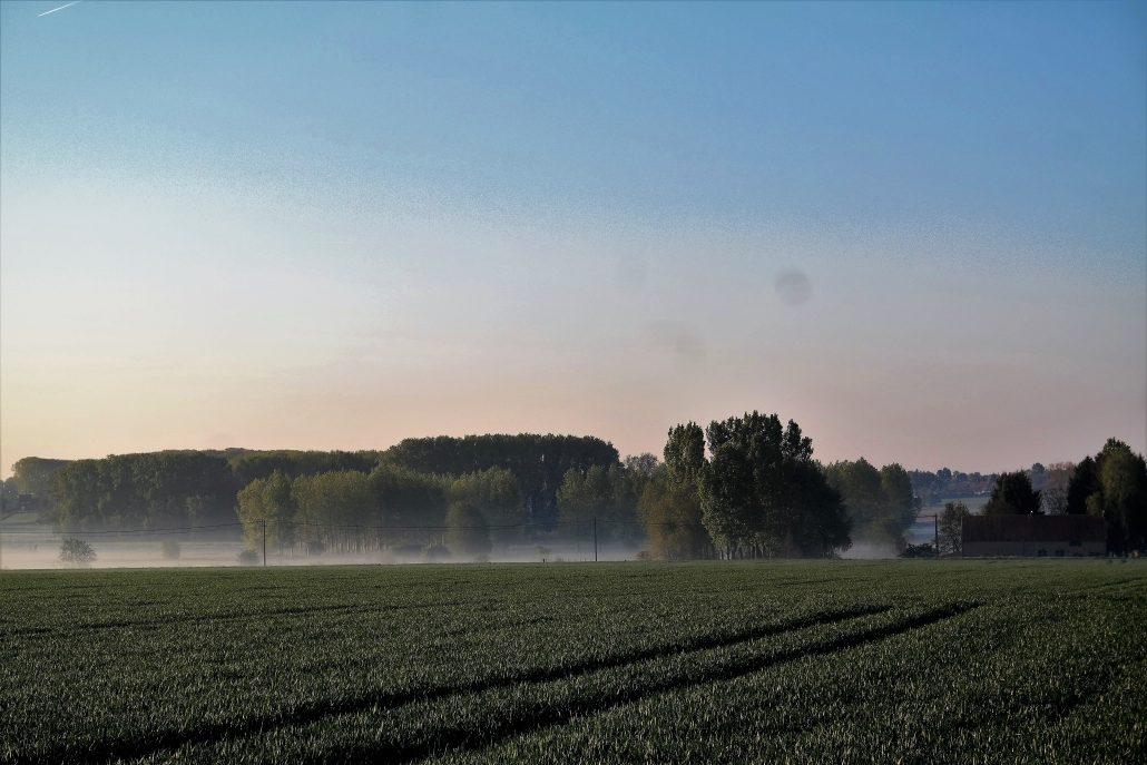 's Morgens hangt er vaak nevel over het veld, een bijzonder mooi uitzicht