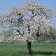 April is bloesemmaand en in het Hageland kan je dan volop van de mooie bloesems genieten